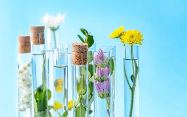 Екстракт чи проста рослина? | Amrita