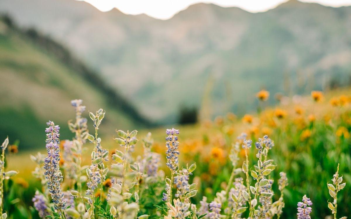 Квіти у полі