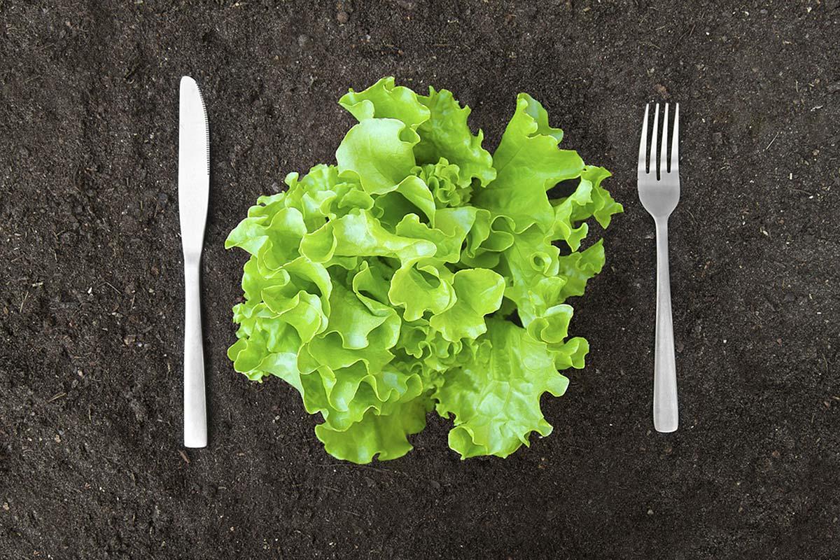 Салат листовой, вилка и нож