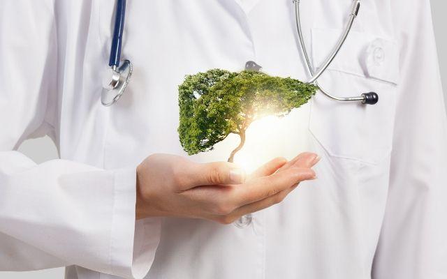 Дерево-печінка в долоні на фоні лікаря
