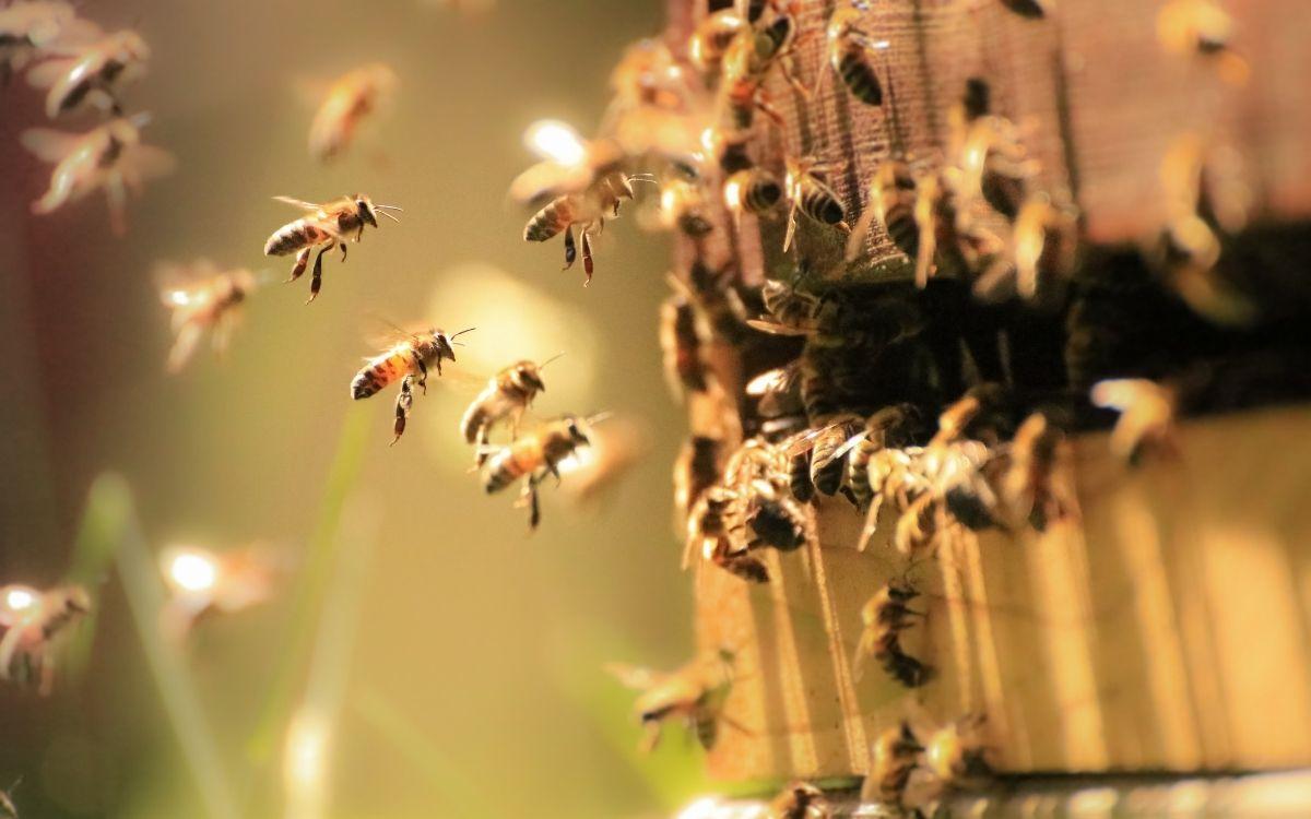 Вулик з бджолами
